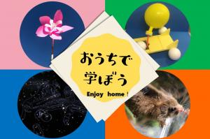 八ヶ岳総合博物館『おうちで学ぼう/enjoy home』